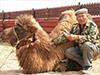 «Верблюжья шерсть»